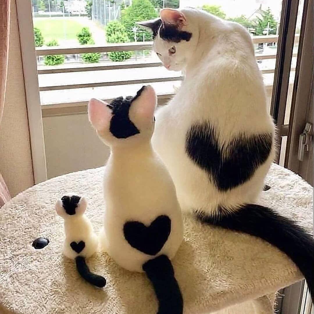 Lovely Needlework Süßeste haustiere, Katzen, Süße katzen