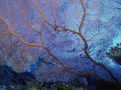 A Beautiful Coral Creates a Complex Pattern Underwater Lámina fotográfica por Bill Curtsinger en AllPosters.com.mx