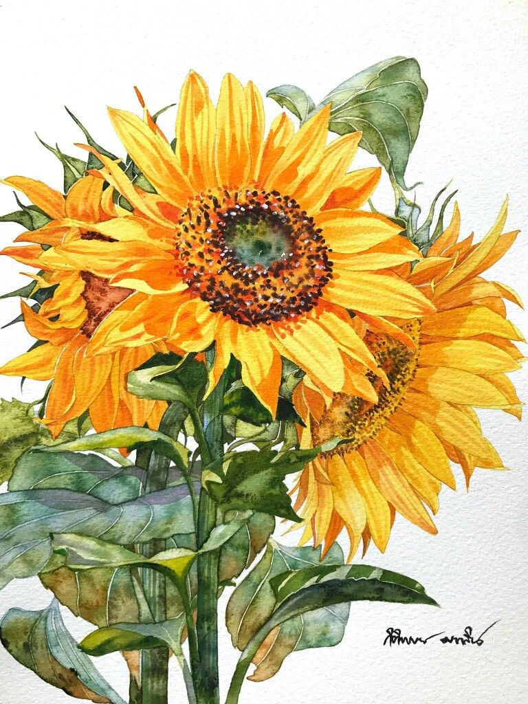 Sunflowers Watercolour Painting Artist Kitipong Maksin Size
