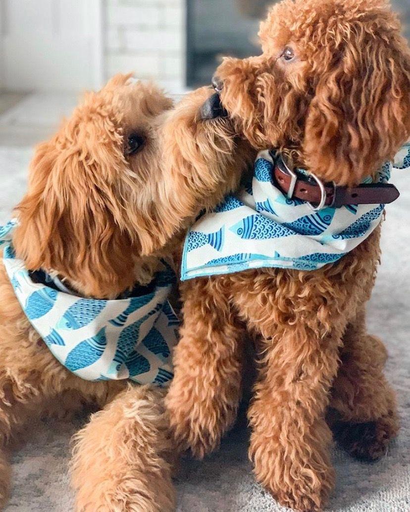 Turquoise Rope Leather Dog Collar Coast Brands Makes Stylish