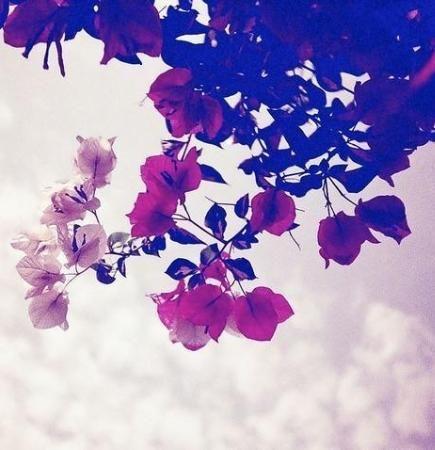 11 Refreshing Desktop Backgrounds To Celebrate Springtime Cool Backgrounds Desktop Wallpapers Backgrounds Cute Wallpaper Backgrounds