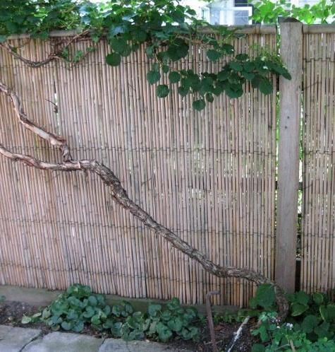 Backyard X Scapes Rolled Bamboo Fencing At Remodelista