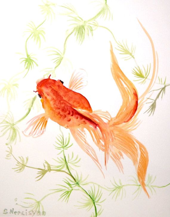 Goldfish Original Watercolor Painting 8 X 10 By Originalonly