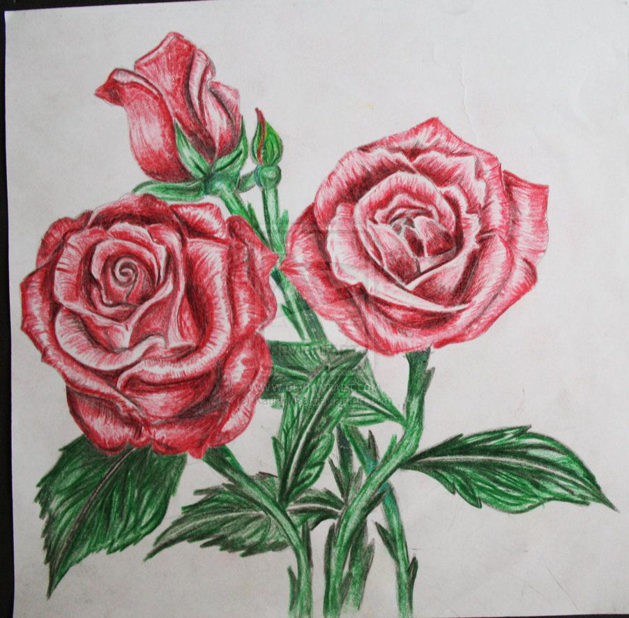 image flowers in pencils - Google Search | flowers ...