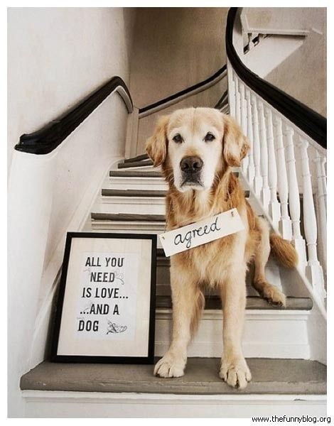 Funny Animals With Sayings All You Need Is Love And A Dog Agreed