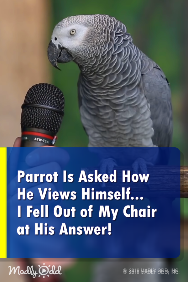Parrot asked how he views himself. I fell out of my chair at his answer! #parrot #parrots #bird #birds #funny #animal #pets #video #amazonparrot #animalsandpets
