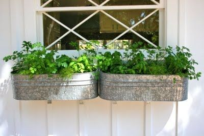 The Polished Pebble: Herb Garden Window Box In Galvanized Tubs.