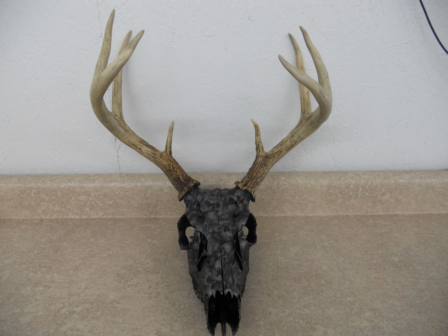 Deer skull mount ideas - Deer Skull Dipped At Southern Outlaw Hydrographics