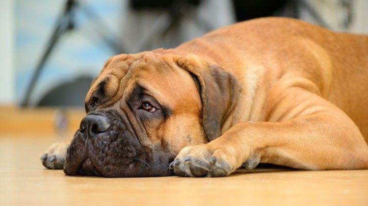 Miért fontos a féreghajtás? A kezeletlen kutya téged is megfertőzhet - Az Én Kutyám
