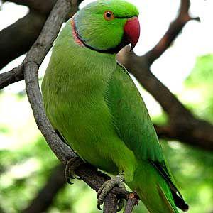 Animal Parrot Pet Birds Colorful Parrots