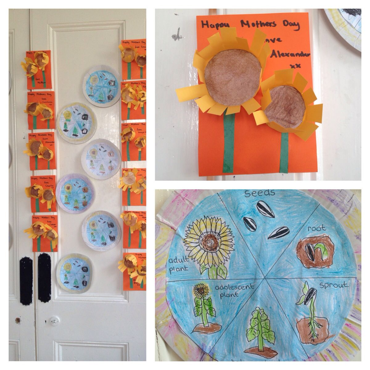 Life Cycle Sunflower Craft
