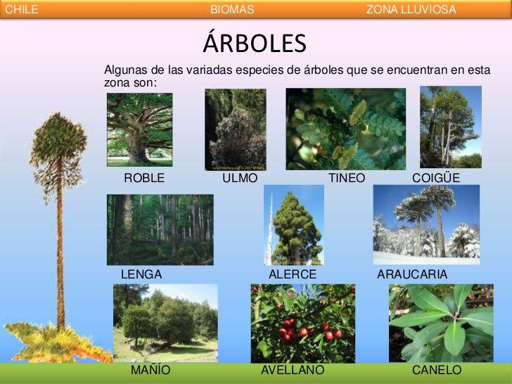28 Ideas De árboles Medicinales Arboles Plantas Medicinales Plantas