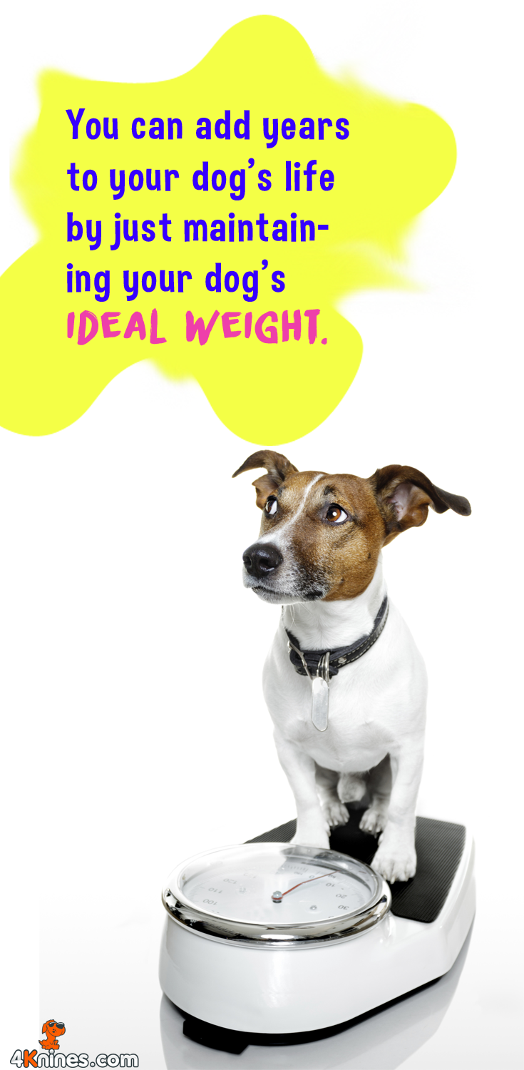 If you feel your dog is overweight, ask your Veterinarian to help you calculate a reasonable caloric intake for your dog. Then determine the appropriate diet for your furry family member and stick to it.