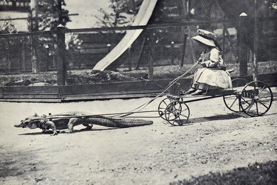 c. 1900 Crocodile Cart