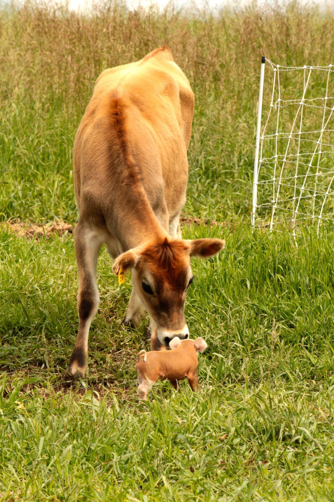 A meeting… - considerbardwellfarm | Pets | Animals ...