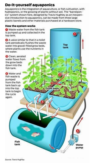 PDF: Free Detailed Instructions on Making a Aquaponics