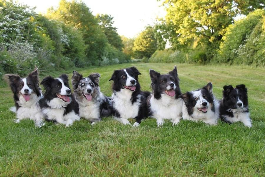 Love this pic. Beautiful Border Collies Border collie