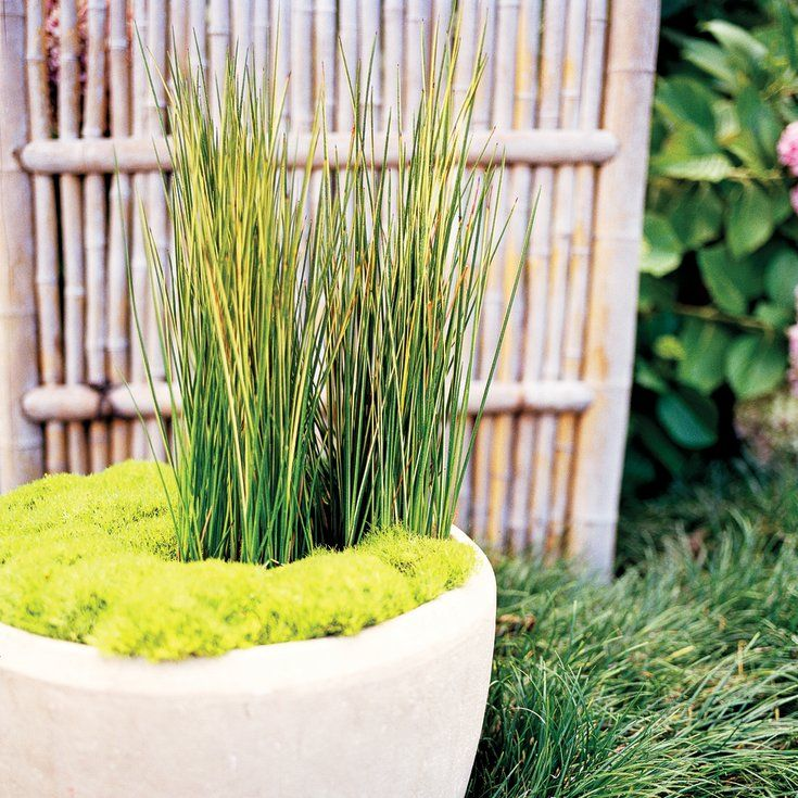 Ornamental Grass Garden Plan 10 favorite ornamental grasses grasses garden grass and gardens 10 favorite ornamental grasses workwithnaturefo