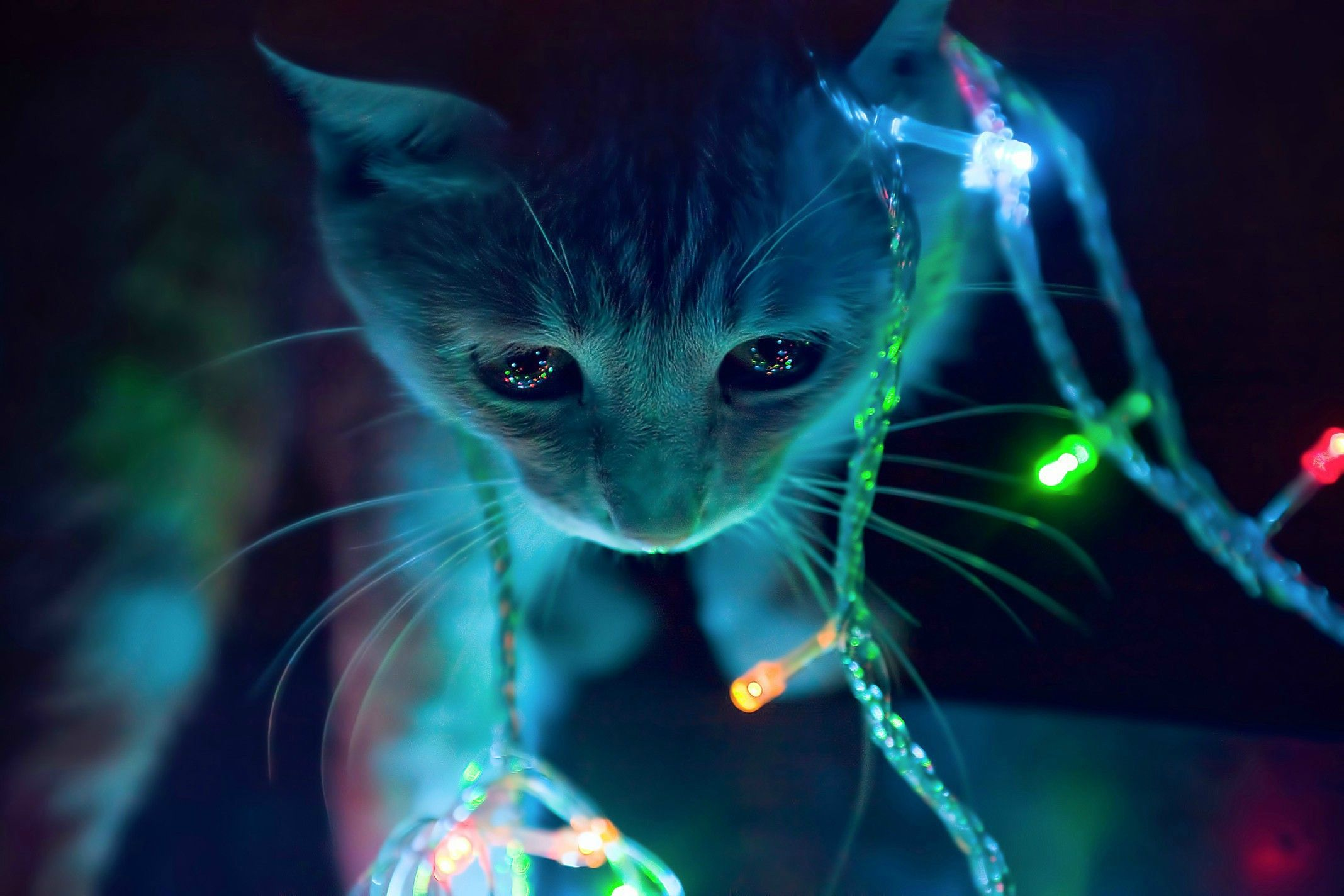 2136 x 1424. The kitten and the LEDs. | Wallpaper | Pinterest