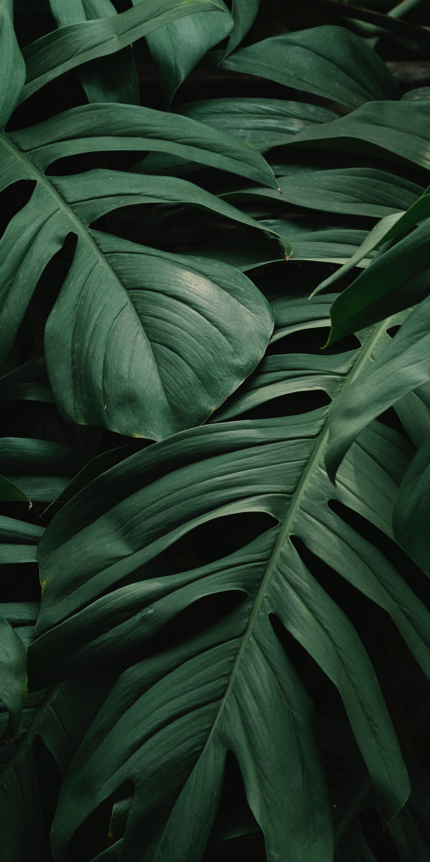 Oboi Oboinatelefon Oboidlyatelefona List Leaf Wallpaper