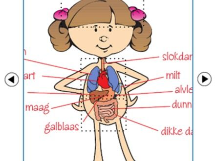 Inside a human body for kids