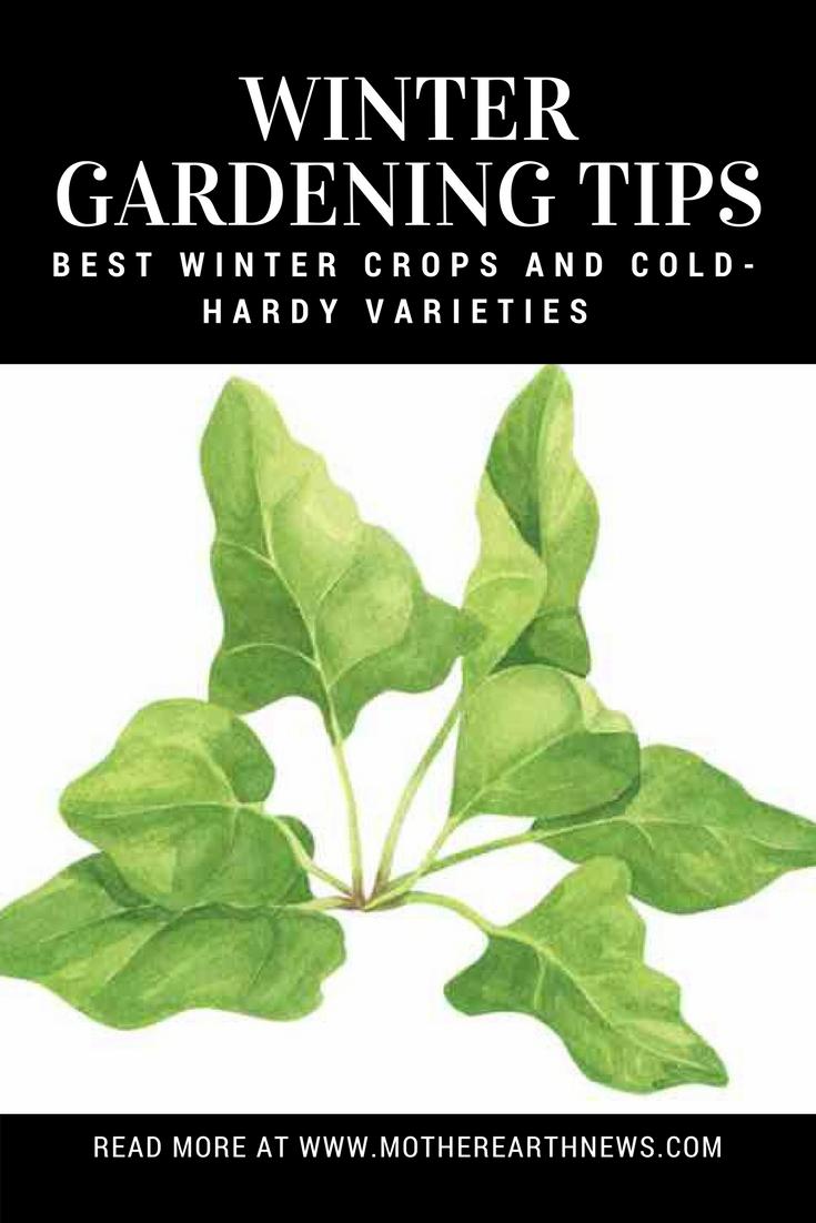 winter gardening tips best winter crops and cold hardy varieties