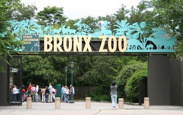 The Bronx Zoo.