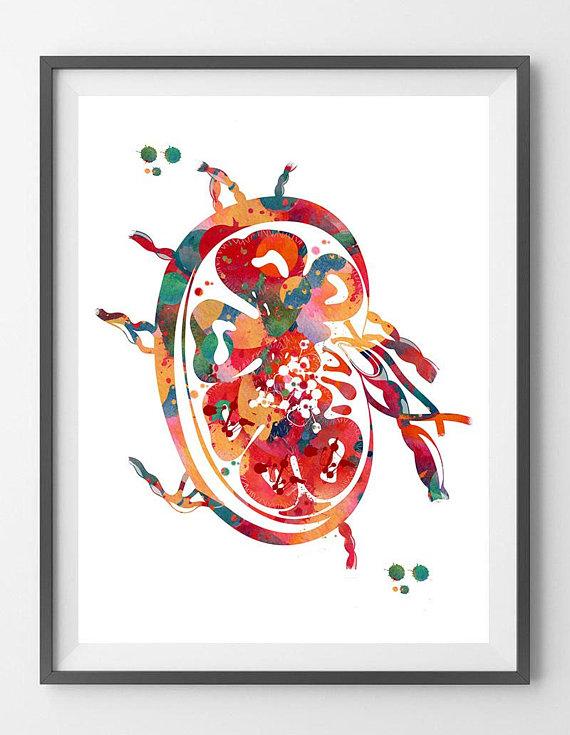 Lymph Node Anatomy Print Body Lymphatic System Watercolor
