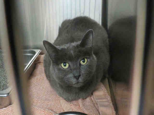 Here Is Hobert An Adoptable Guy In The Toronto Area Cat Adoption Animal Shelter Humane Society