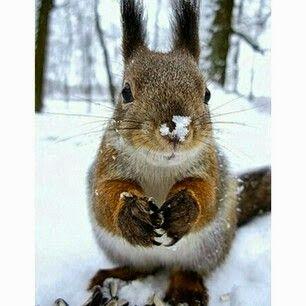 Epingle Par Wanda Radloff Sur Squirrels Photos Prints Stuff Animaux Ecureuil Petits Animaux