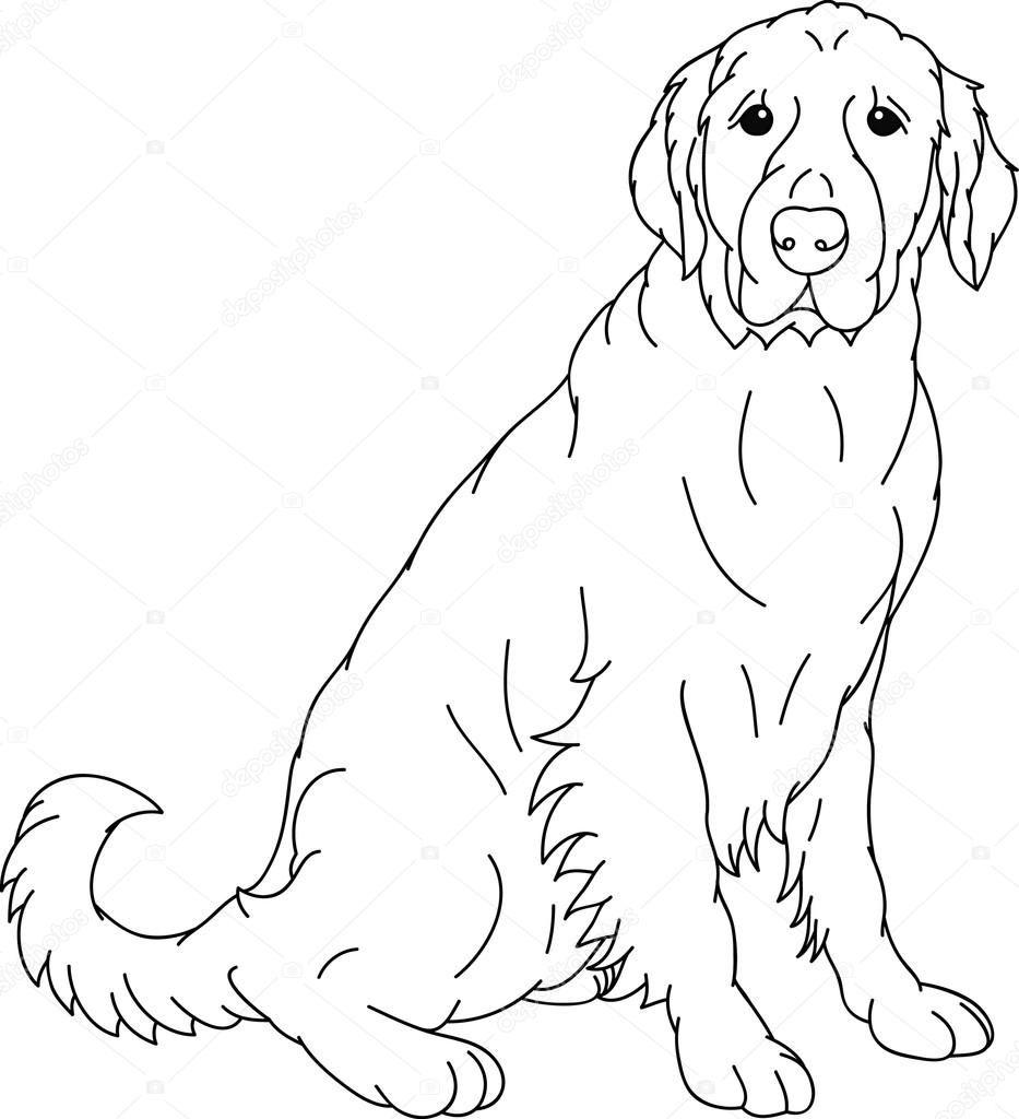 Disegni Labrador Risultati Yahoo Italia Della Ricerca Di Immagini Dog Coloring Page Pencil Drawings Of Animals Animal Drawings [ 1024 x 933 Pixel ]