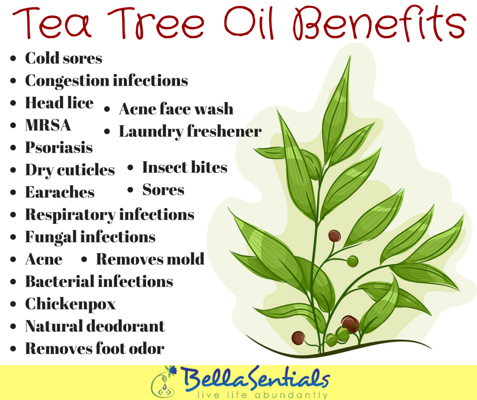 Tea Tree Oil: Uses, Side Effects, Interactions, Dosage ...