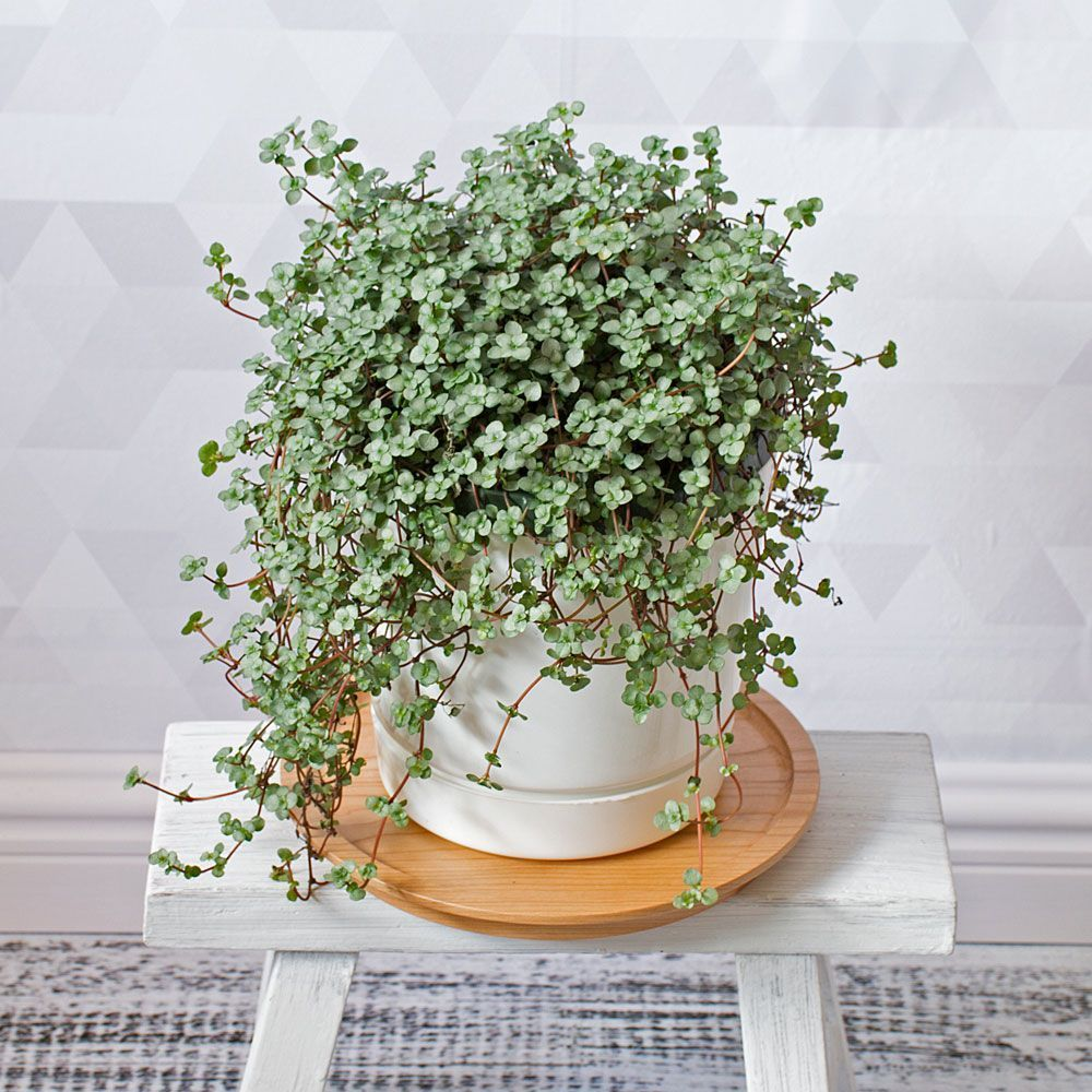 These Are The Best Places To Plants Online Refinery29