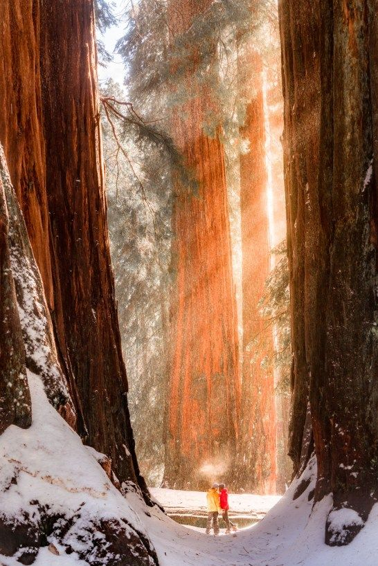 Photo of SEQUOIA NATIONAL PARK in WINTER   Helpful 2020 Guide