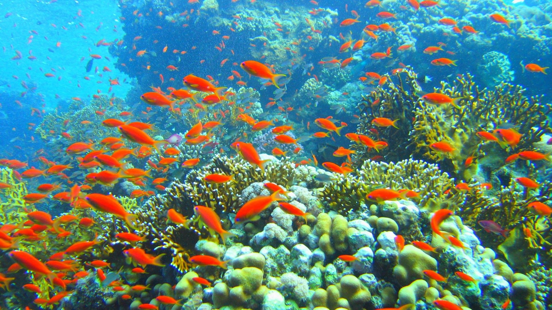 Download Fish 1080p 1920x1080 Hd Wallpaper Places To Visit Red