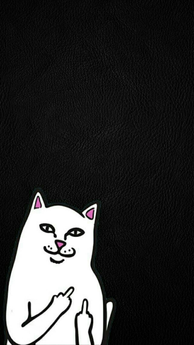 Ripndip Nermal Wallpapers Chido Ripndip Wallpaper Cute
