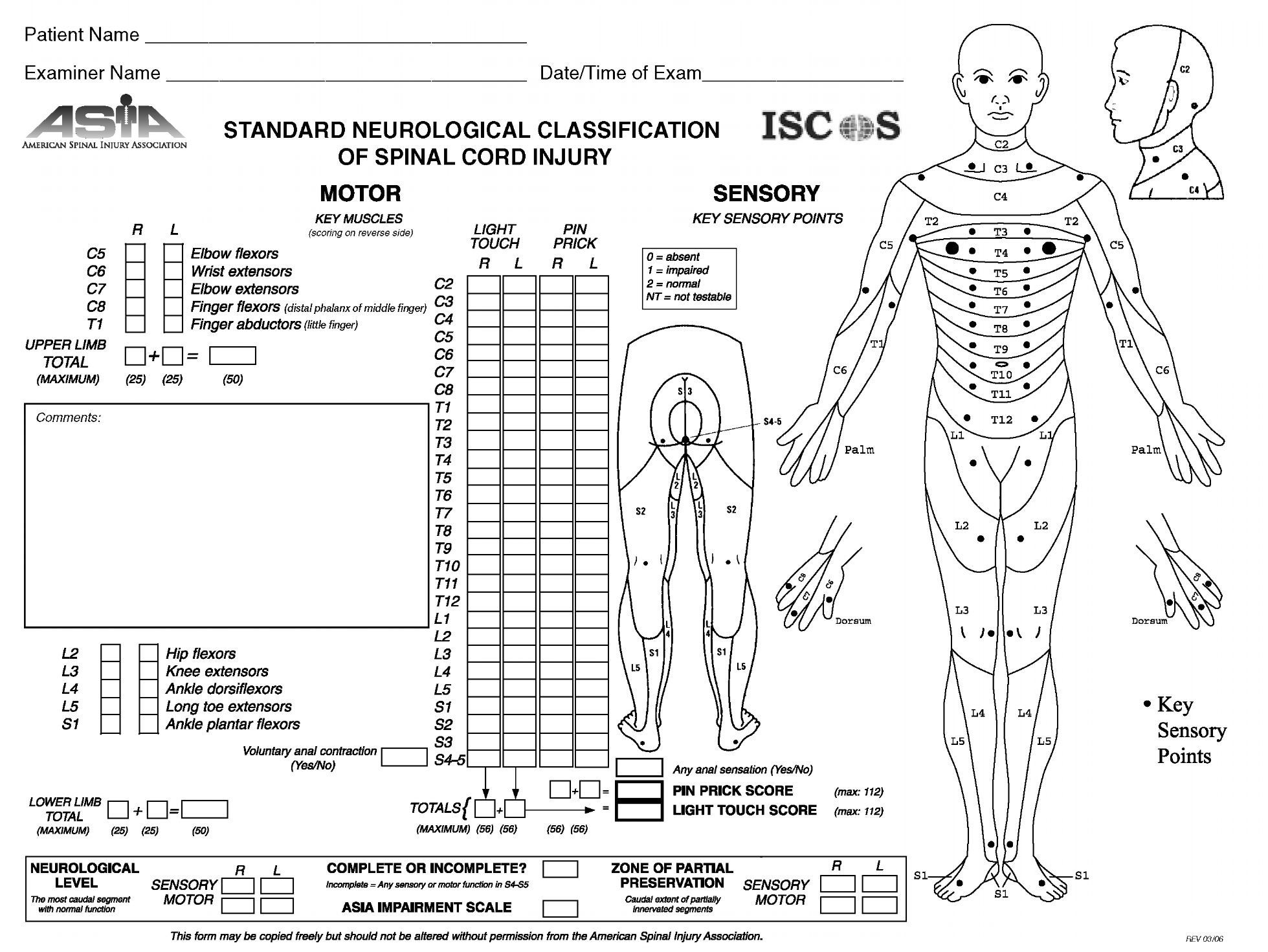 Spinal Column Worksheet