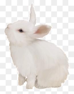 Rabbit Png White Cute Bunny White Rabbit Cute Bunny Rabbit Png Image And Clipart Rabbit Png Rabbit White Rabbit