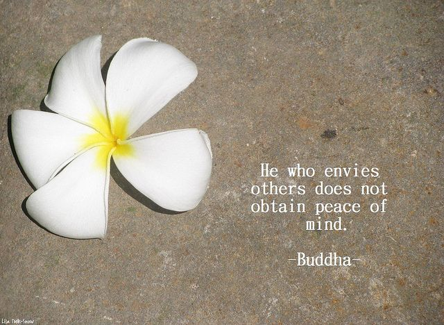 frangipani buddha quote buddha quote buddhist quotes peace quotes