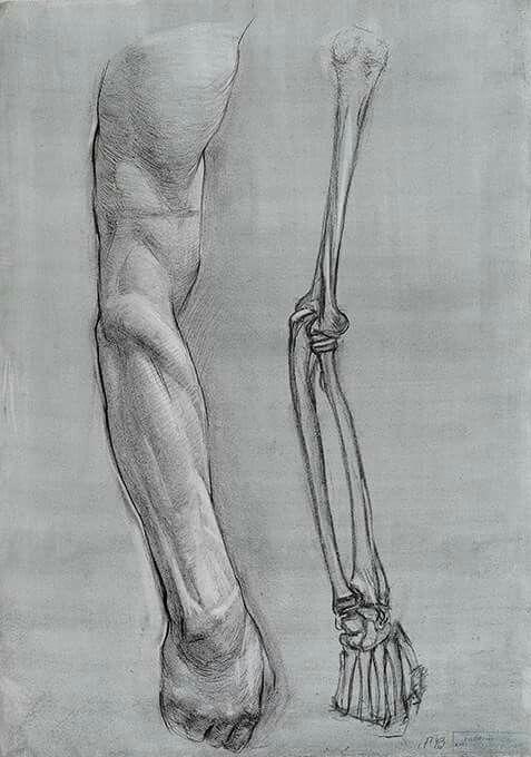 Pin de Braian Ortiz Pedraza en Muscles & Skeleton   Pinterest ...