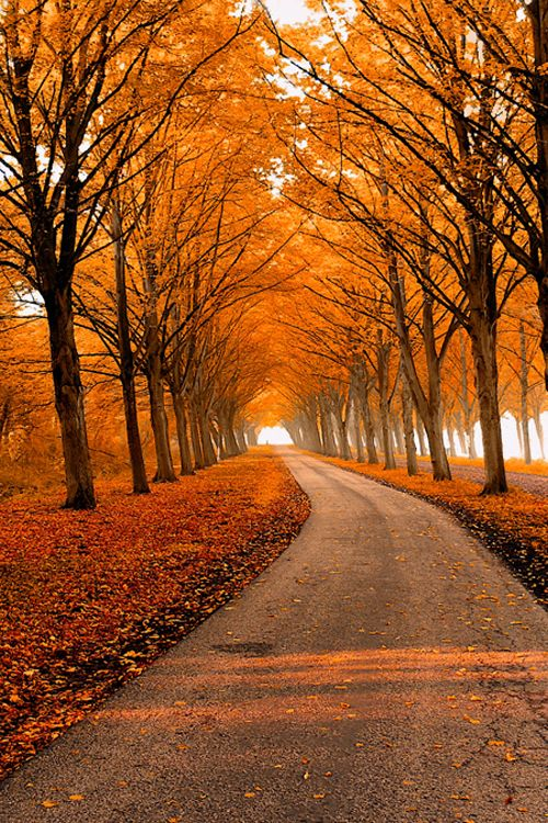 Autumn Orange Way Country Road In Trees This Would Be A Wonderful Walk And On That Windy Day When The Leaves Are Swirling Down It Beautiful