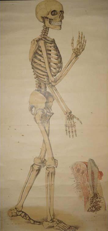 SKELETT, ein Anatomisches Schulbild um 1880- 1900. | Skelette ...