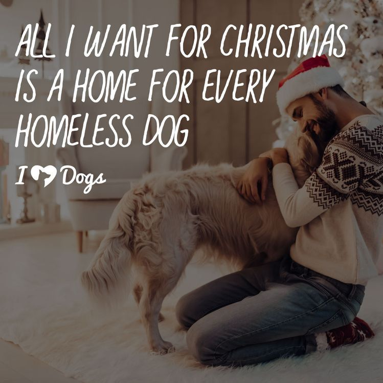 Pin By Shelly Kumar On Dogs Homeless Dogs Dogs Dog Quotes