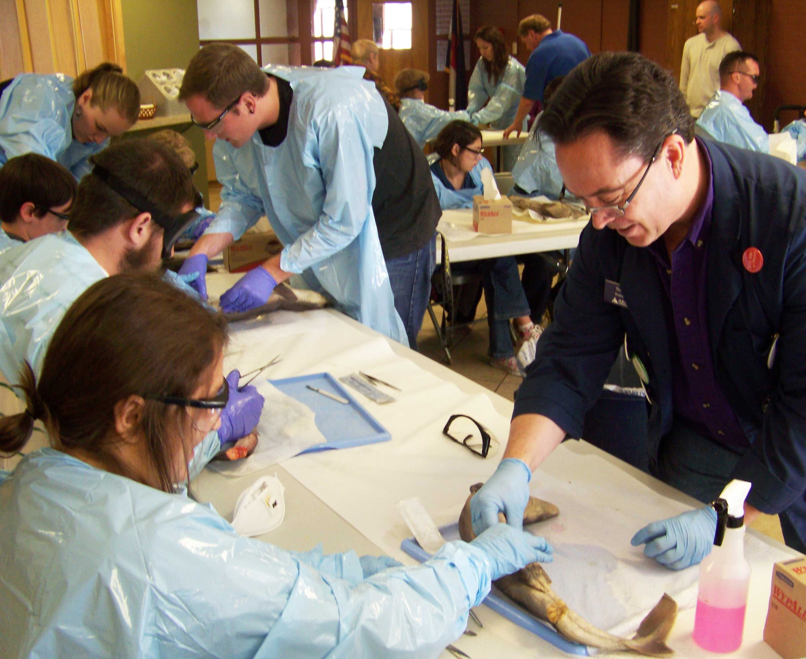 Biology Professor Terry Harrison Dissects Sharks With Students At