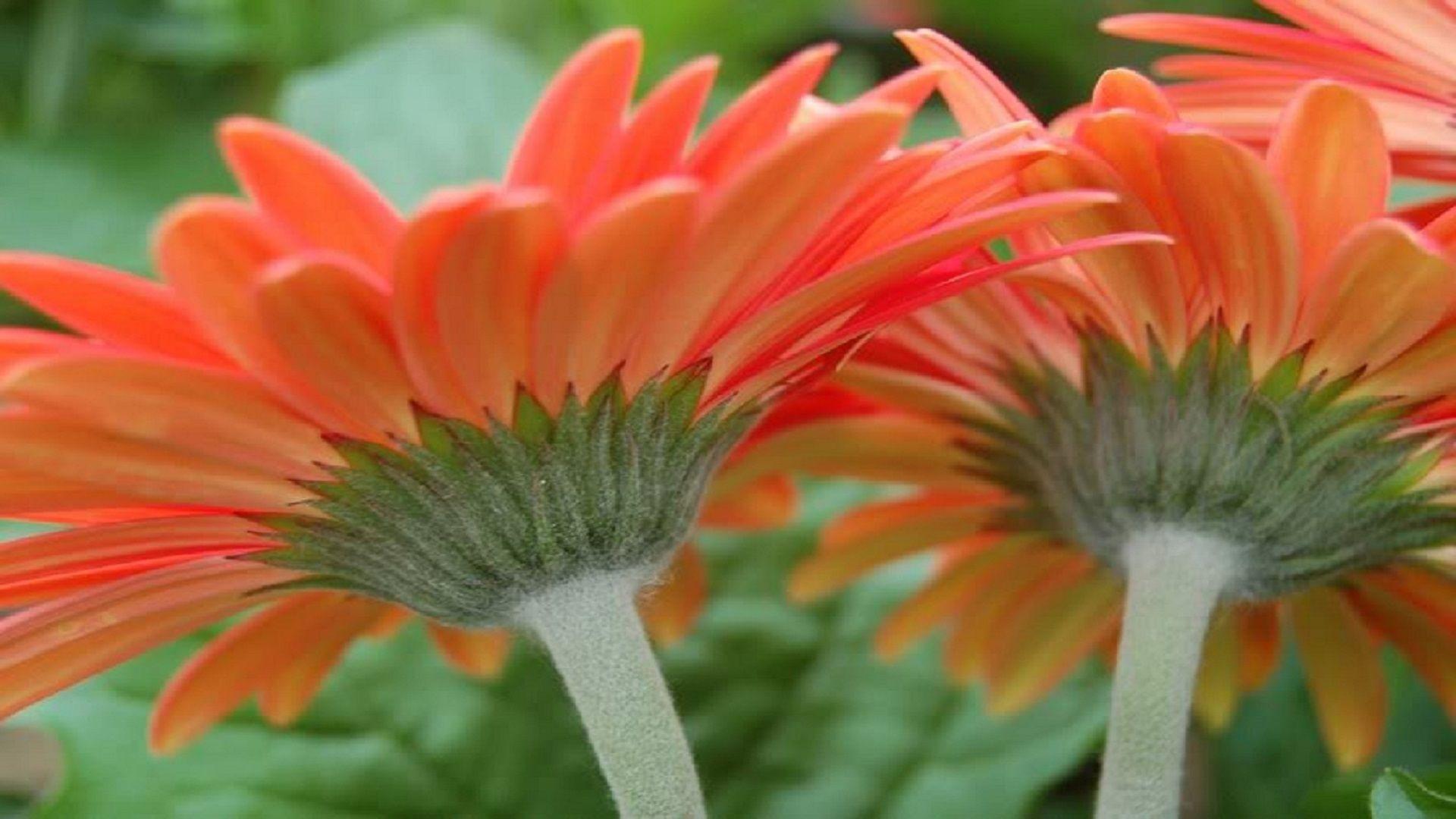 color peach - Google Search | Color-Peach | Pinterest | Colour peach ...