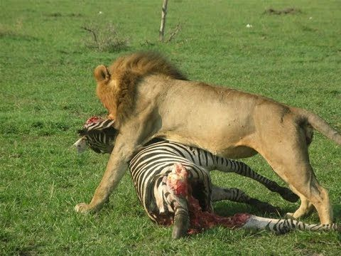 Top 10 Amazing Escapes - Deer, Zebra, Buffalo vs Crocodile