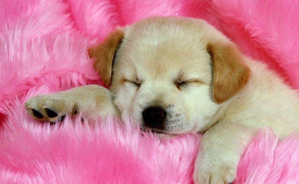 Download Baby Dog Wallpapers Wallpaper Cave Download Baby Dog Wallpapers Top Free Baby Dog Backgrounds Wallpap Milye Shenki Samye Milye Zhivotnye Milye Sobaki Baby and dogs hd desktop wallpapers