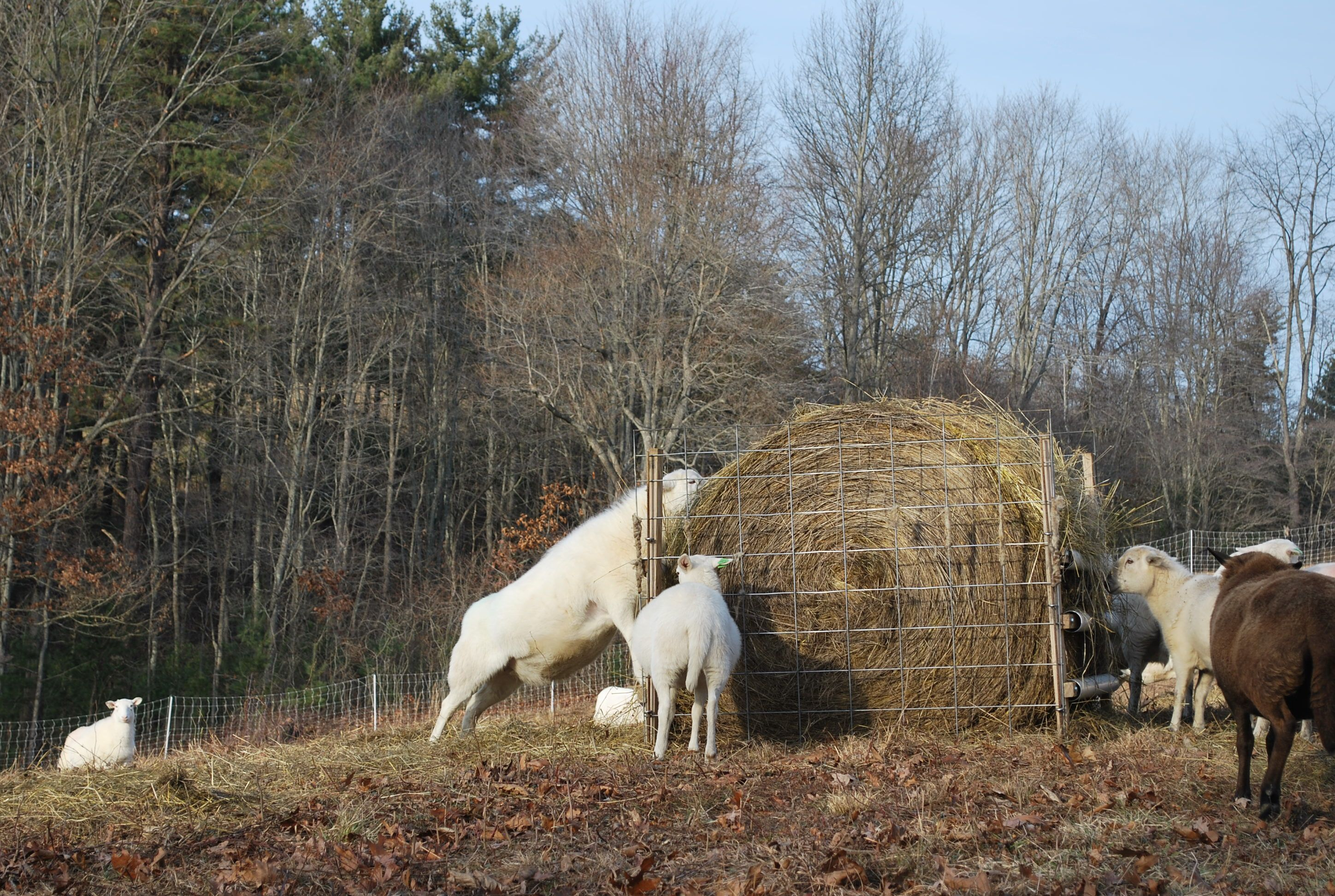 working bale pallets hay round of pen feeder for things goats pin feeders goat made my pinterest