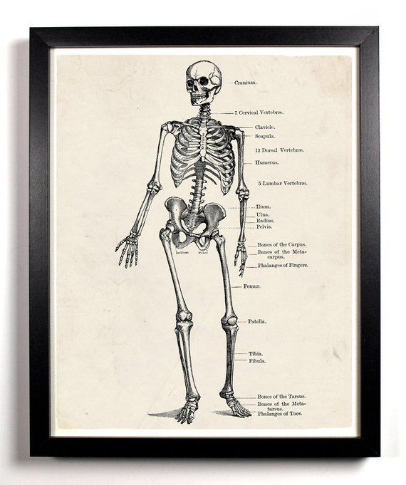 Human Anatomy Print Biology Gifts Cubicle Decor Gothic Home Decor