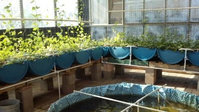Pretty Neat DIY Aquaponics System With Cheaper Materials Kiddie Pool Pvc Concrete Blocks